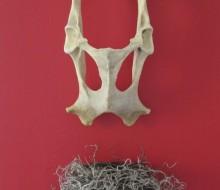 Ouroboros: Nest
