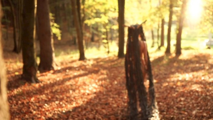 Irreversible Forest video