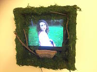 Irreversible Forest Wall Video Installation